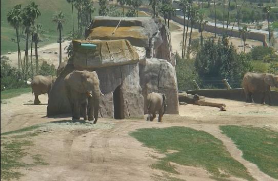 Слоны в зоопарке сан диего